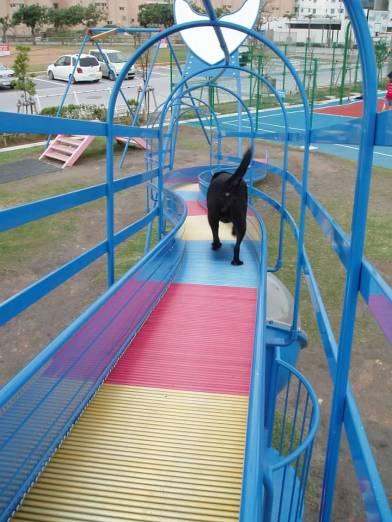 Rolly Slide!