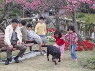 mido sakura hill okinawan kids