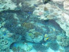 okinawa underwater fishies2